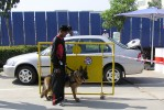 Working Dogs |