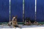 Working Dogs | ,OLYMPUS DIGITAL CAMERA,