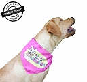 DogSpot Do You Need A Poochi ? Bandana - Large