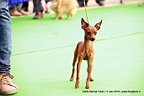 delhi-kennel-club1421134447.jpg