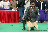 delhi-kennel-club1421134549.jpg