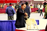 delhi-kennel-club1421134567.jpg