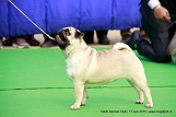 delhi-kennel-club1421134609.jpg