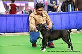 delhi-kennel-club1421134659.jpg