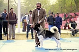 delhi-kennel-club1421136641.jpg