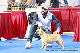 delhi-kennel-club1421136746.jpg