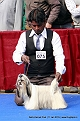 delhi-kennel-club1421136856.jpg