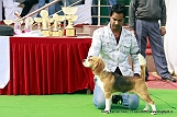 delhi-kennel-club1421137001.jpg