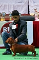 delhi-kennel-club1421137210.jpg