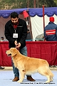 delhi-kennel-club1421137367.jpg