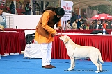 delhi-kennel-club1421137472.jpg