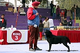 delhi-kennel-club1421137739.jpg