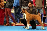 delhi-kennel-club1421137979.jpg