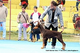 delhi-kennel-club1421138138.jpg