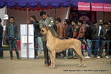 delhi-kennel-club1421138309.jpg