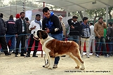 delhi-kennel-club1421138437.jpg