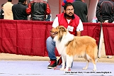 delhi-kennel-club1421148612.jpg