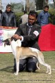 gurgaon-dog-show-2-feb-2014_103.jpg