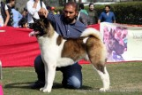 gurgaon-dog-show-2-feb-2014_109.jpg