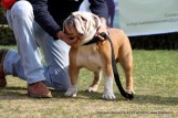 gurgaon-dog-show-2-feb-2014_111.jpg