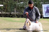 gurgaon-dog-show-2-feb-2014_117.jpg