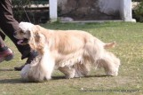 gurgaon-dog-show-2-feb-2014_123.jpg
