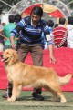gurgaon-dog-show-2-feb-2014_129.jpg