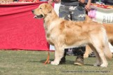 gurgaon-dog-show-2-feb-2014_131.jpg