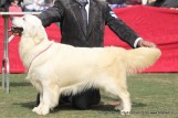 gurgaon-dog-show-2-feb-2014_144.jpg