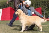 gurgaon-dog-show-2-feb-2014_161.jpg