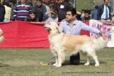 gurgaon-dog-show-2-feb-2014_164.jpg