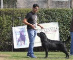 gurgaon-dog-show-2-feb-2014_183.jpg