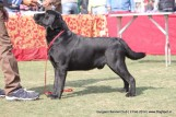 gurgaon-dog-show-2-feb-2014_204.jpg
