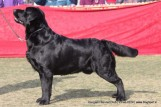 gurgaon-dog-show-2-feb-2014_206.jpg