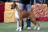 gurgaon-dog-show-2-feb-2014_217.jpg