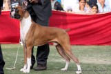 gurgaon-dog-show-2-feb-2014_221.jpg