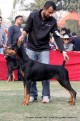 gurgaon-dog-show-2-feb-2014_231.jpg