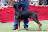 gurgaon-dog-show-2-feb-2014_237.jpg