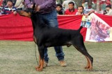 gurgaon-dog-show-2-feb-2014_239.jpg