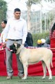 gurgaon-dog-show-2-feb-2014_258.jpg