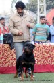 gurgaon-dog-show-2-feb-2014_267.jpg