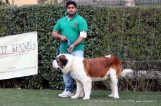 gurgaon-dog-show-2-feb-2014_294.jpg
