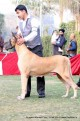 gurgaon-dog-show-2-feb-2014_315.jpg