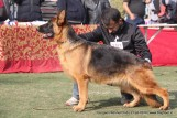 gurgaon-dog-show-2-feb-2014_344.jpg