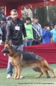 gurgaon-dog-show-2-feb-2014_355.jpg