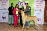 gurgaon-dog-show-2-feb-2014_379.jpg
