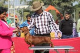 gurgaon-dog-show-2-feb-2014_53.jpg