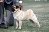 gurgaon-dog-show-2-feb-2014_75.jpg