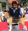 gurgaon-dog-show-2-feb-2014_84.jpg