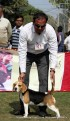 gurgaon-dog-show-2-feb-2014_90.jpg